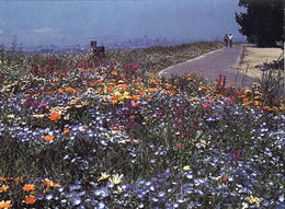RoadSide hardy wildflower seed mix